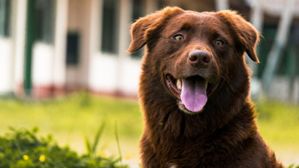 The natural world provides the perfect inspiration for brown dog names