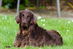 Brown dog names don't need to follow expected patterns