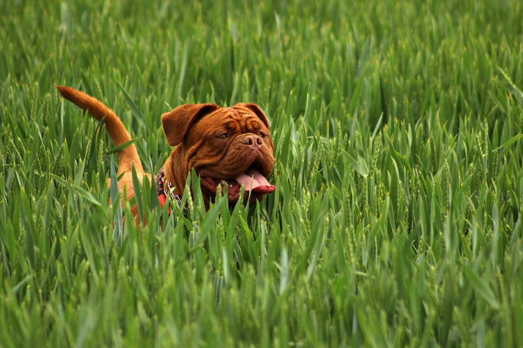 Brown dog names don't need to be ordinary