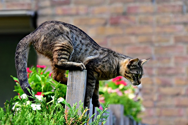 Tabby cat names can come from their colors or patterns