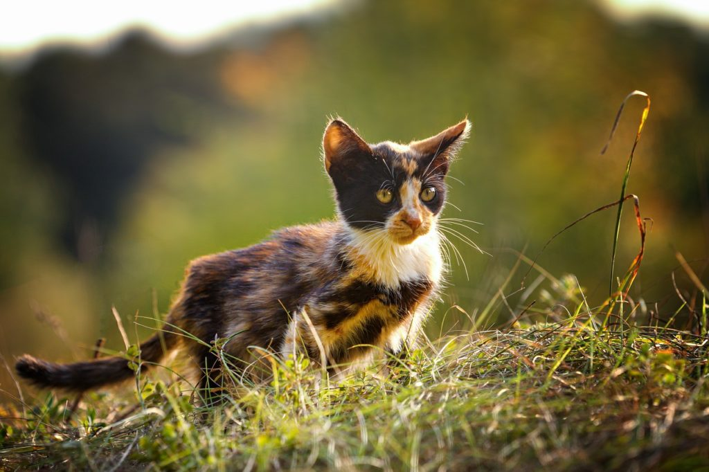 Calico cat names should reflect the uniqueness of their coat