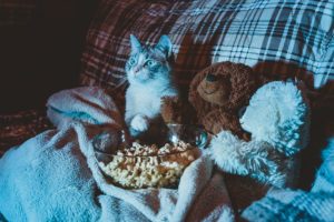 Answering whether it's okay if cats eat popcorn or not is tricky