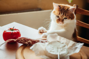 If cats have salami, you need to consider their health conditions