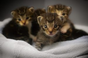 The cutest cat breeds get everyone's attention