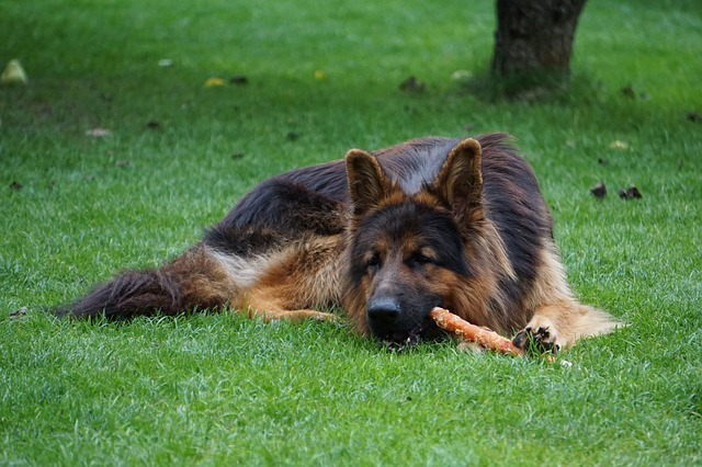 Dog chews are delicious ways for your dog to exercise their jaws