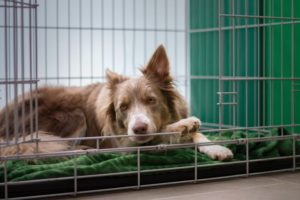 Dog crates keep your furry friend safe