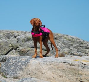 Dog life jackets keep your pup safe wherever you go swimming