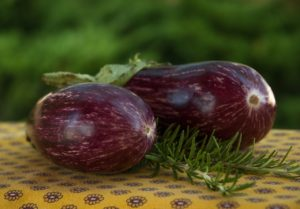 Can dogs eat eggplant? The answer isn't straightforward