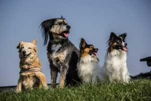 Dog breeds for first-time owners come in every shape and size