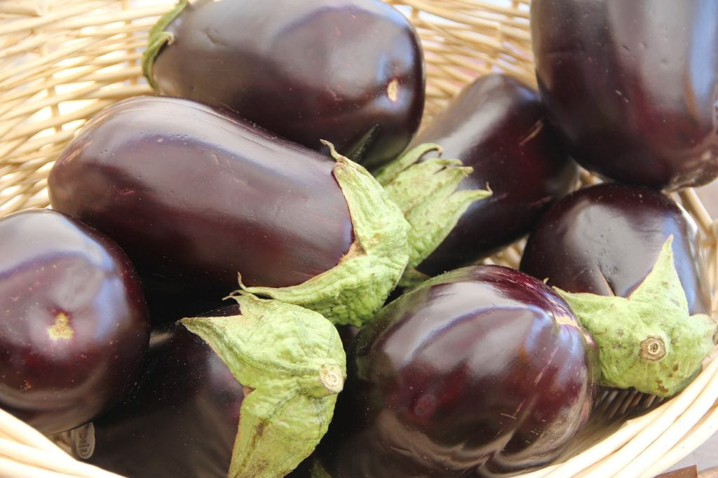 If dogs eat eggplant, they may develop an allergic reaction