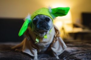 Dog Baby Yoda costumes are the perfect canine photo ops