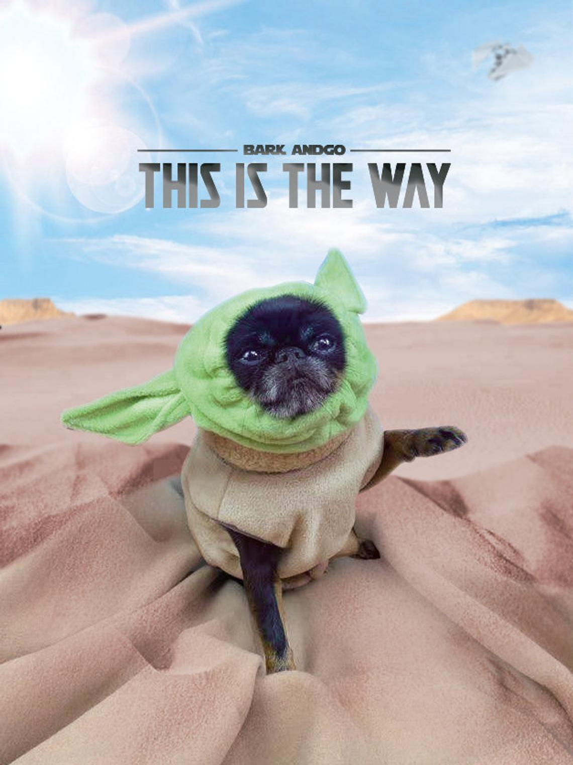Bark, and Go Baby Yoda Dog Costume