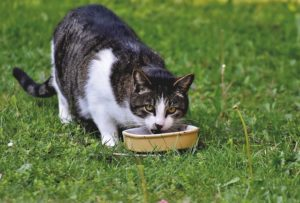 While you may see cats eat dog food now and then, it's not something to encourage