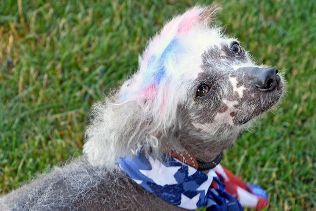 Even fur chalks and blow pens aren't considered safe when it comes to dog hair dyes