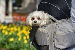 Dog carrier backpacks give pups a better vantage point