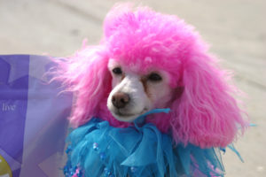 Dog hair dyes seem harmless, but they're actually dangerous