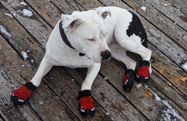 Dog shoes work in summer, winter, and everything in-between