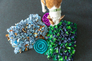 Dog slow feeders are important tools for keeping your pup safe