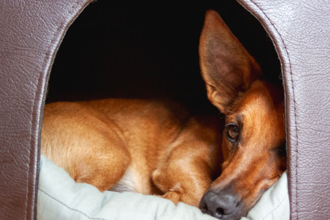 Indoor dog houses help reduce anxiety