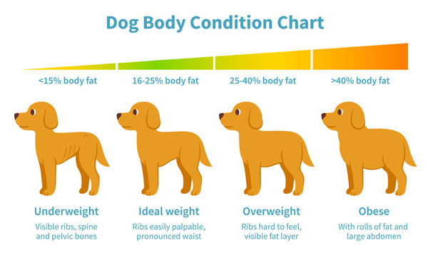 Body condition charts help you determine your dog's ideal weight