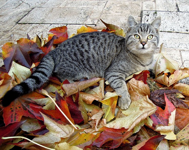 Outdoor cats may need special considerations