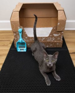 Disposable litter boxes have multiple uses