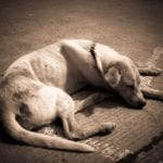 A dog losing weight often signals a health concern