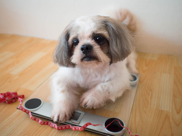 A dog losing weight should prompt thoughts of concern