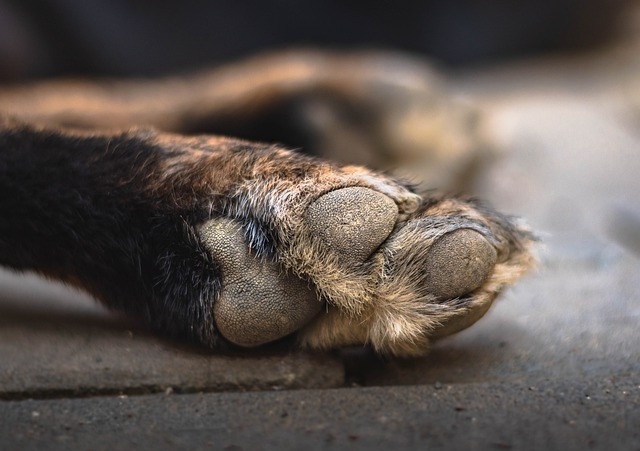 A dog licking their paws can lead to drying and cracking