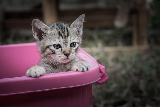 To litter train your kitten, you need the right supplies