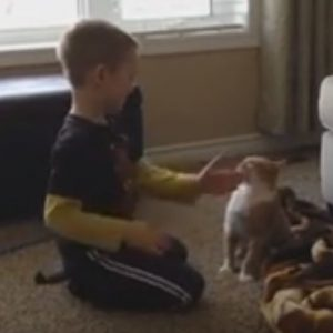 Proper behavior is important for all pet interactions