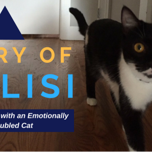 Kalisi showed every sign of being an emotionally-troubled cat