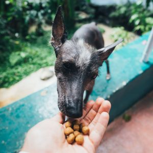 Dog food for dogs with allergies may require trial and error