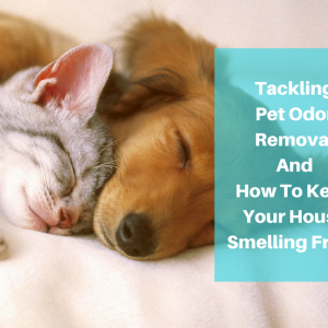 Pet odor removal is important to many pet owners