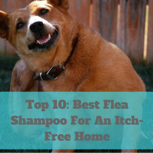 The best flea shampoos will combat all of the itchy pests