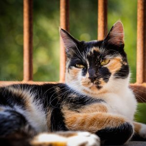 Calico cat names offer some of the best chances for creativity