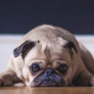 Your dog is lethargic - now what?