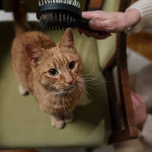 Cat brushes are an important part of cat hygiene