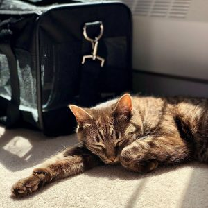 Cat carriers are the safest way for kitties to travel