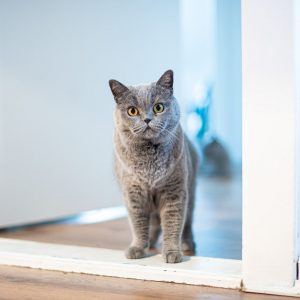 Cat doors eliminate the need to constantly open and close doors