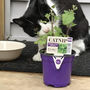 The best catnip for cats comes from organic sources