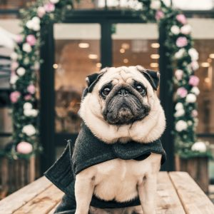 Winter dog coats keep certain breeds comfortable in colder temperatures