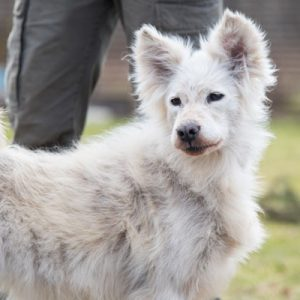 A dog losing hair can mean possible illness