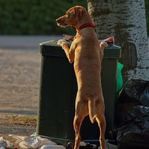 Dog-proof trash cans keep your pup safe and your house clean
