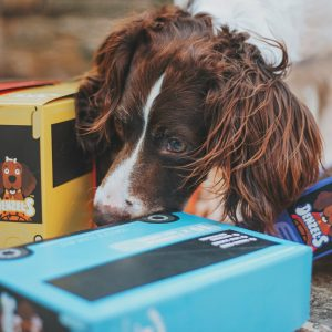 Dog subscription boxes mean something new and exciting every month