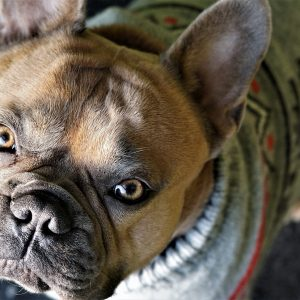 The best dog sweaters keep your dog warm in cold weather