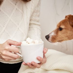 Dogs eat marshmallows and end up with severe GI upset