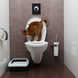 Flushable cat litter is a biodegradable option