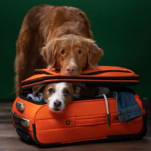 Flying with a dog requires a lot of careful preparation