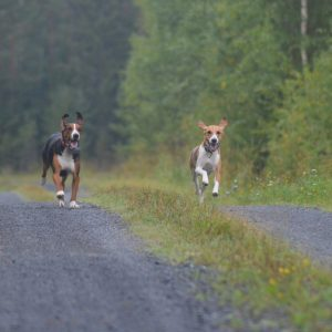 Dog GPS Trackers help you keep an eye on your wayward hound